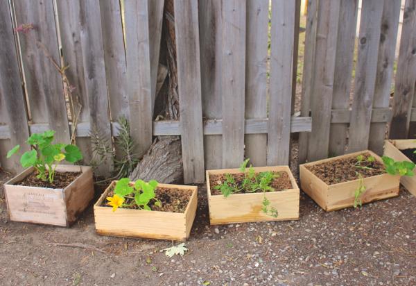 container garden squash