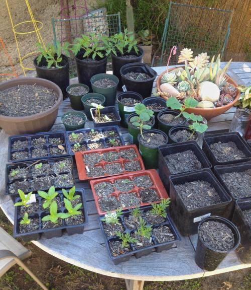 garden seedling starts
