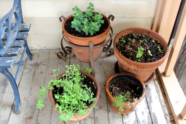 herbs in pots on porch