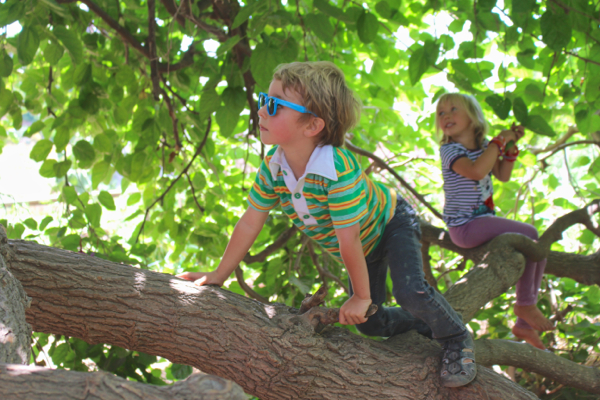 climbing mulberry tree