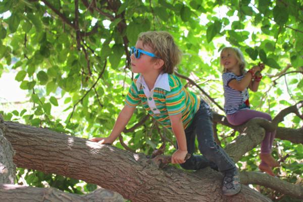 climbing mulberry tree