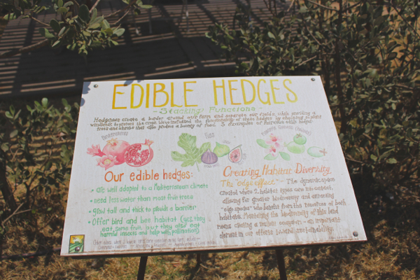 edible hedges