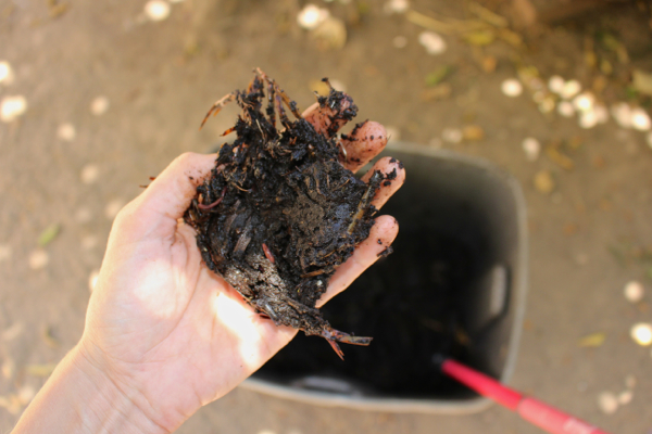 vegan compost
