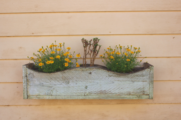yellow flowers in box