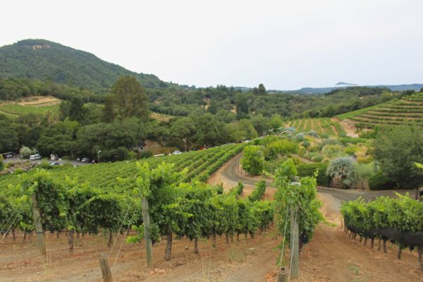 biodynamic winery