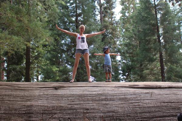 vegan family camping sequoia