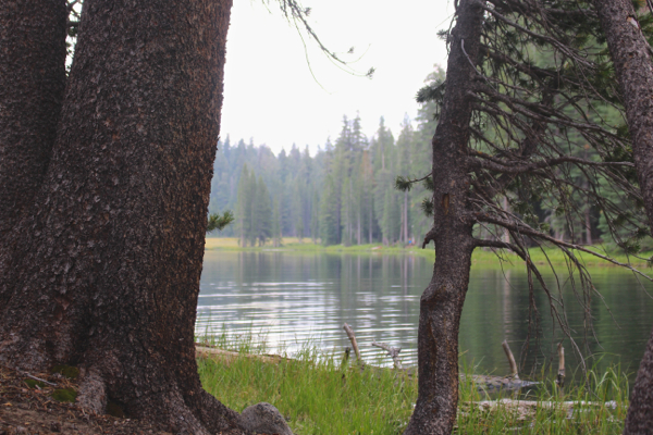 yosemite meadow lake view