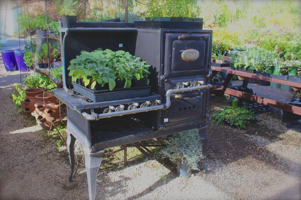 antique stove planter