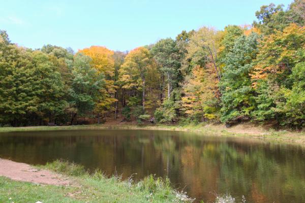 leaves changing at lake