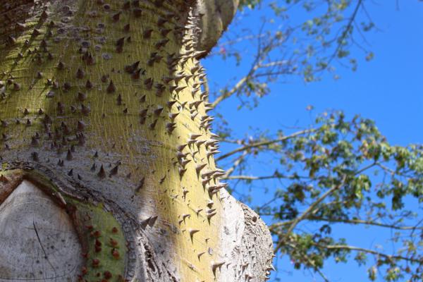 torture tree