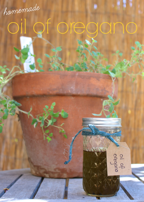 oil of oregano tutorial