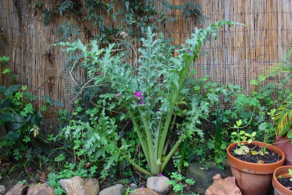 artichoke with flowers