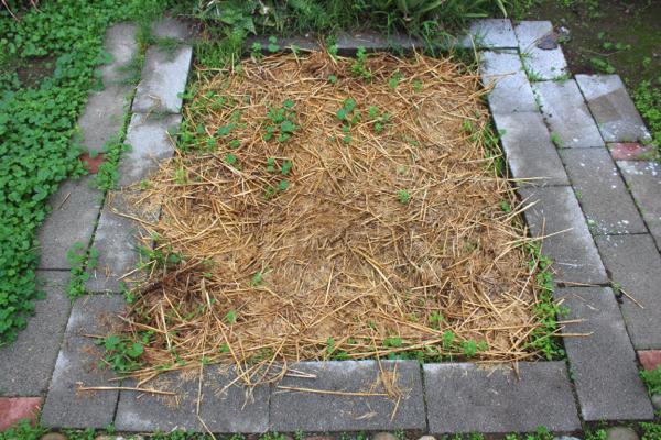 hay in garden bed
