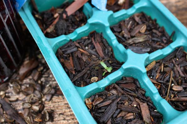 tiny seedling