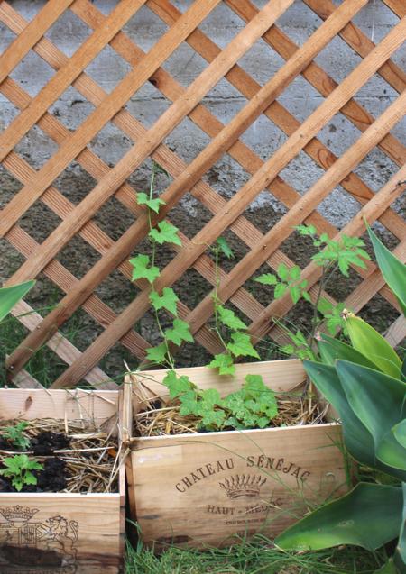 Bonzai Aphrodite garden 6