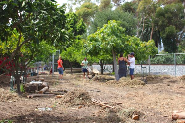Abandoned Community Garden 6