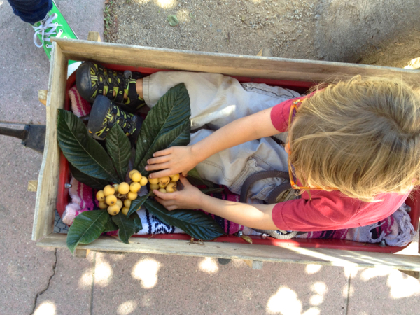 urban foraging in southern california