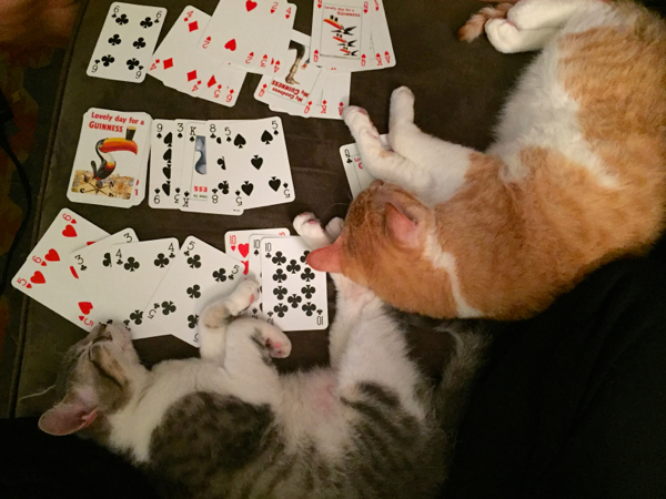 playing cards with cats